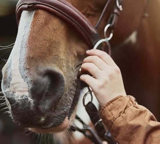 Someone handling a horse